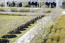 beautiful trees planted outside a green field